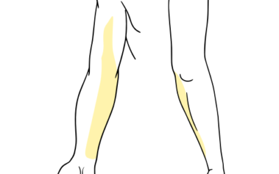 Medial Antebrachial Cutaneous